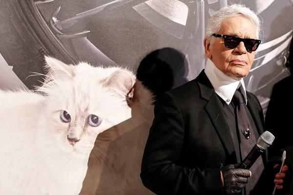 Кошка Лагерфельда прибрала миллиарды владельца. 2