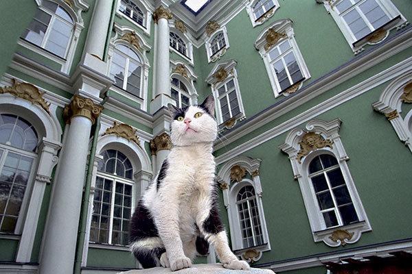Коты из Эрмитажа едут на биеннале. коты 2